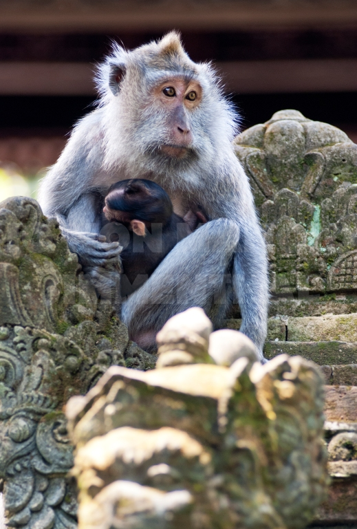 monkey forest_01