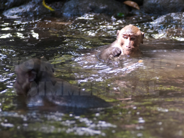 monkey forest_02