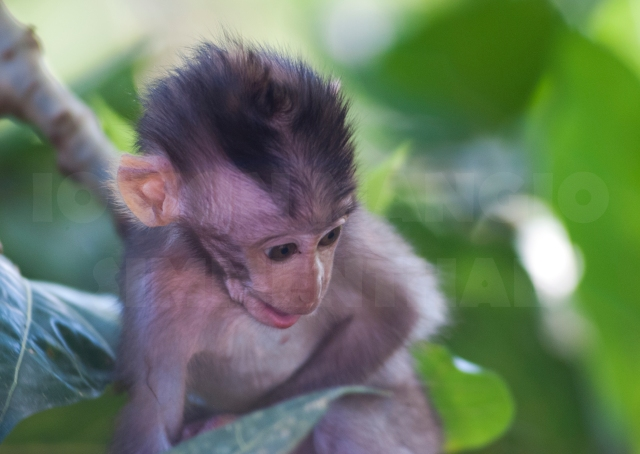 monkey forest_03
