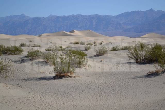 death dune